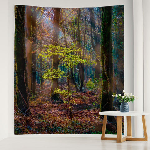 Image of Tapestry - Misty Irish Spring Forest in Coole Park, County Galway - James A. Truett - Moods of Ireland - Irish Art