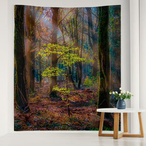 Tapestry - Misty Irish Spring Forest in Coole Park, County Galway - James A. Truett - Moods of Ireland - Irish Art