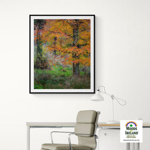 Image of Print - Autumn Tree in Clondegad Wood, County Clare Poster Print Moods of Ireland