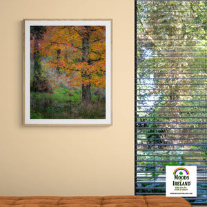 Print - Autumn Tree in Clondegad Wood, County Clare Poster Print Moods of Ireland