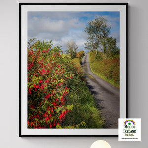 Print - Fuchsias Blooming in the Irish Countryside - James A. Truett - Moods of Ireland - Irish Art