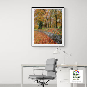 Print - Autumn Colours in Killimer, County Clare Poster Print Moods of Ireland