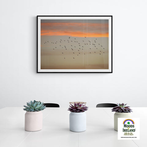 Image of Print - Starlings at Sunset over County Clare - James A. Truett - Moods of Ireland - Irish Art