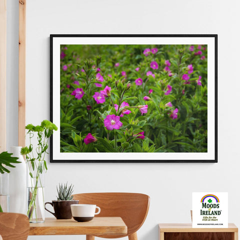 Image of Print - Great Willowherb Blossoms in the Irish Countryside - James A. Truett - Moods of Ireland - Irish Art