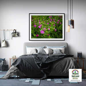 Print - Great Willowherb Blossoms in the Irish Countryside - James A. Truett - Moods of Ireland - Irish Art