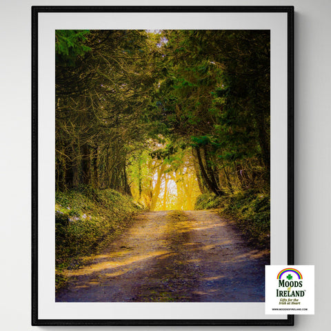 Image of Print - Afternoon Sun on Irish Country Road, County Clare - James A. Truett - Moods of Ireland - Irish Art