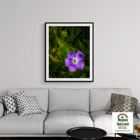 Image of Print - Purple Spring Periwinkle in County Clare - James A. Truett - Moods of Ireland - Irish Art