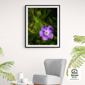 Print - Purple Spring Periwinkle in County Clare - James A. Truett - Moods of Ireland - Irish Art