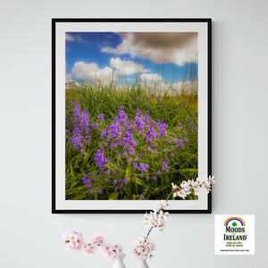 Wildflower Print - Ballycorick Bluebells - James A. Truett - Moods of Ireland - Irish Art