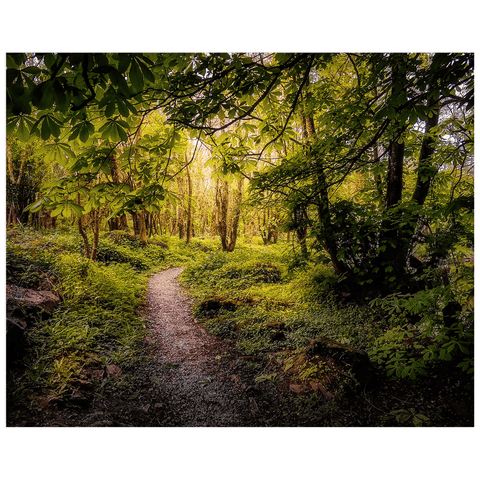 Print - Path in the Faerie Forest at Ballylee, County Galway - James A. Truett - Moods of Ireland - Irish Art