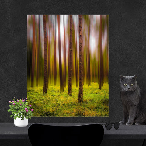 Image of Print - Ethereal Mood in Portumna Forest Park, County Galway Poster Print Moods of Ireland 12x16 inch