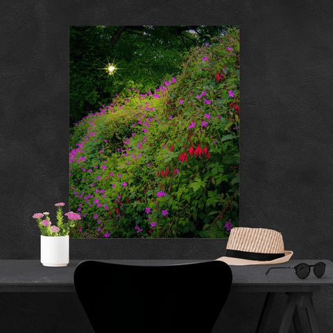 Poster Print - Roadside Cascade of Irish Wildflowers in Afternoon Sun Poster Print Moods of Ireland