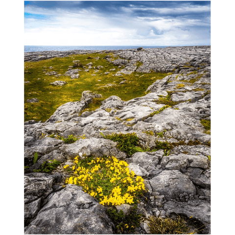 Print - Gorse in the Rugged Burren Limestone - James A. Truett - Moods of Ireland - Irish Art