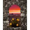 Print - Spring Daffodils and County Clare Sunrise - James A. Truett - Moods of Ireland - Irish Art