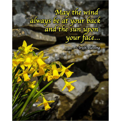 Image of Print - Irish Blessing with Daffodils and Stone Wall Poster Print Moods of Ireland 8x10 inch