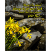 Print - Irish Blessing with Daffodils and Stone Wall Poster Print Moods of Ireland 8x10 inch