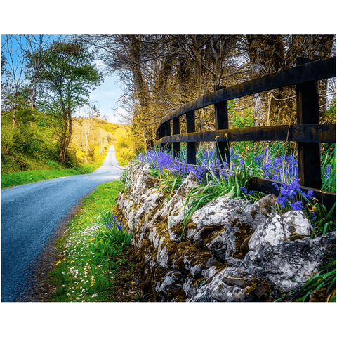 Image of Print - Bluebell-lined County Clare Road - James A. Truett - Moods of Ireland - Irish Art