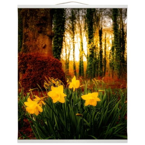 Wall Hanging - Spring Daffodils at Coole Park, County Galway, Ireland - James A. Truett - Moods of Ireland - Irish Art