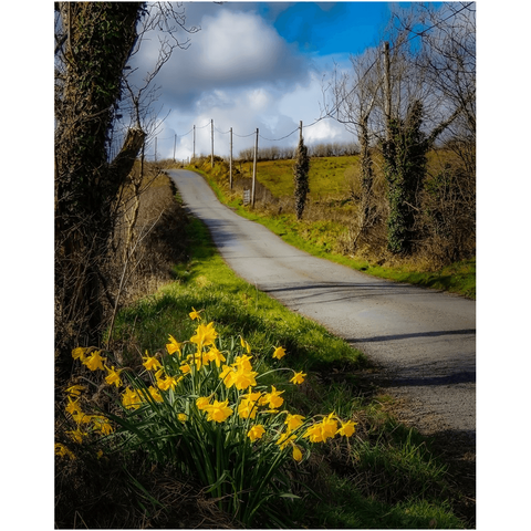 Image of Print - Spring Daffodils under Blue Sky, County Clare - James A. Truett - Moods of Ireland - Irish Art