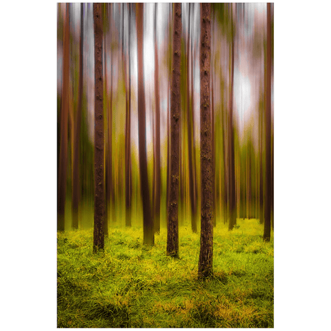 Image of Print - Ethereal Mood in Portumna Forest Park, County Galway Poster Print Moods of Ireland