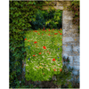 Print - Magical Wildflower Meadow in County Clare - James A. Truett - Moods of Ireland - Irish Art