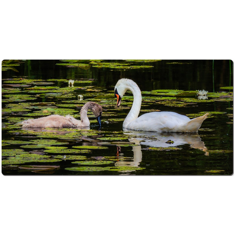 Image of Desk Mat - Swan and Cygnet on Dromoland Lough, County Clare - James A. Truett - Moods of Ireland - Irish Art