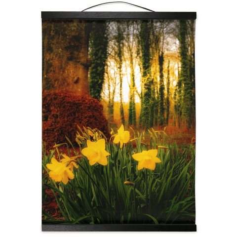 Image of Wall Hanging - Spring Daffodils at Coole Park, County Galway, Ireland - James A. Truett - Moods of Ireland - Irish Art