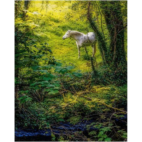 Print - White Horse in 40 Shades of Green, County Clare - James A. Truett - Moods of Ireland - Irish Art