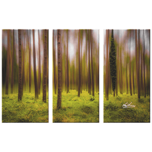 Triptych Canvas - Ethereal Mood in Portumna Forest Park, County Galway Canvas Wall Art Set 3 teelaunch 36x24 inches (12x24 ea.)