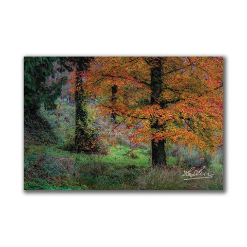 Image of Autumn Tree in Clondegad Wood Poster Print Poster Moods of Ireland