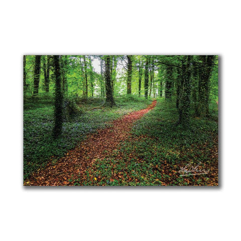 Image of Trail in Coole Park Irish Poster Print Poster Moods of Ireland