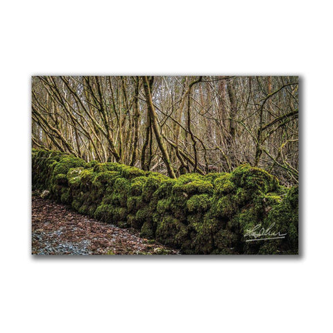 Image of Moss-covered Rock Wall at Coole Park Irish Poster Print Poster Moods of Ireland