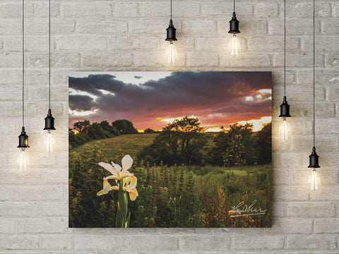 "Image of ""Wild Iris at Sunset"" Irish Poster Print"