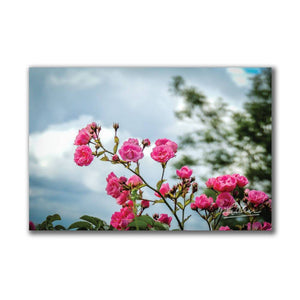 Wild Irish Roses Nature Art Poster Poster Moods of Ireland
