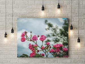 Wild Irish Roses Nature Art Poster
