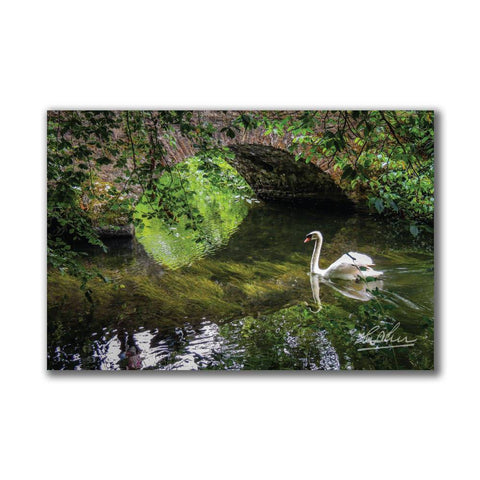 Image of Wild Swan at Ireland's Doneraile Park Irish Poster Print Poster Moods of Ireland