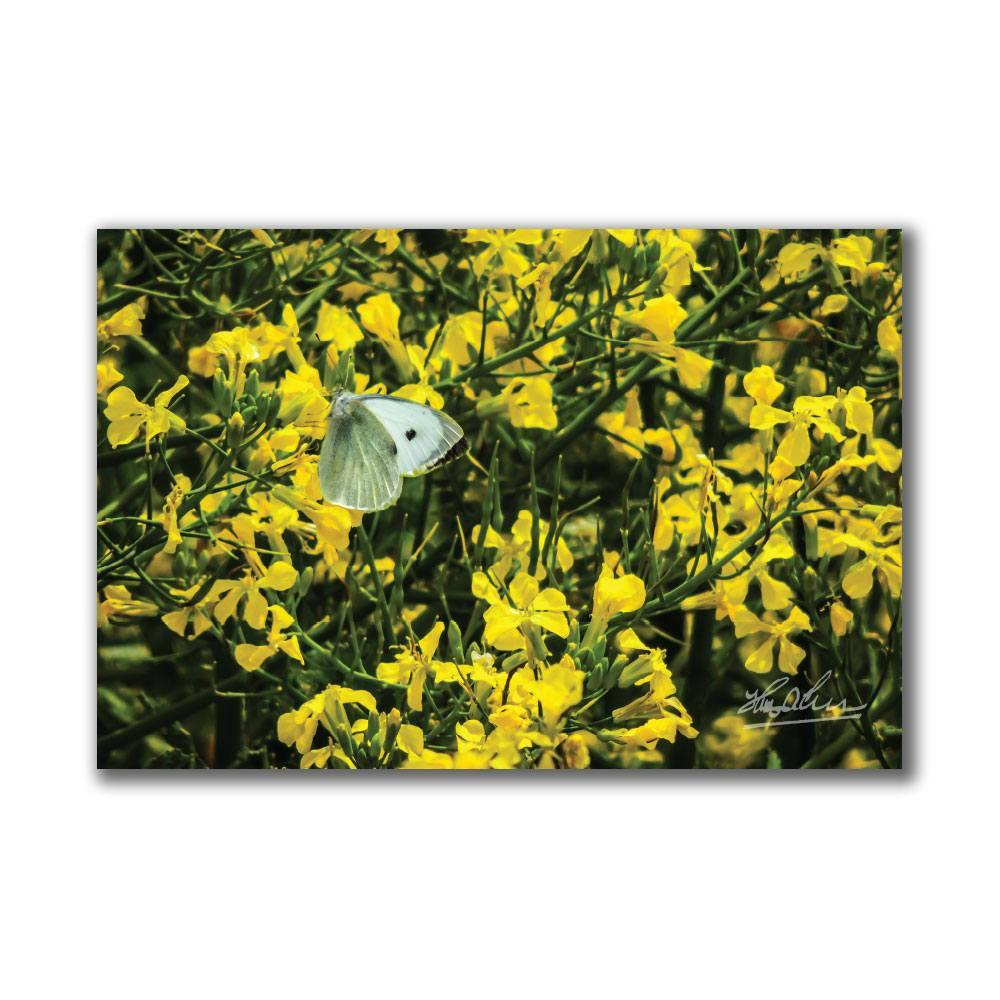 Butterfly and Yellow Wildflowers Irish Poster Print