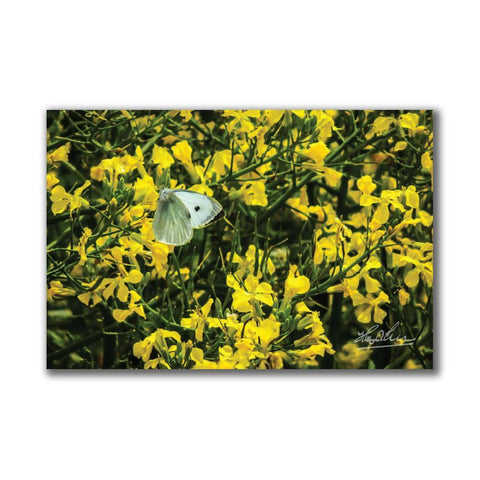 Image of Butterfly and Yellow Wildflowers Irish Poster Print