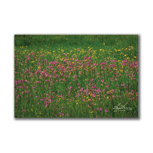 Meadow of Irish Wildflowers Poster Print Poster Moods of Ireland