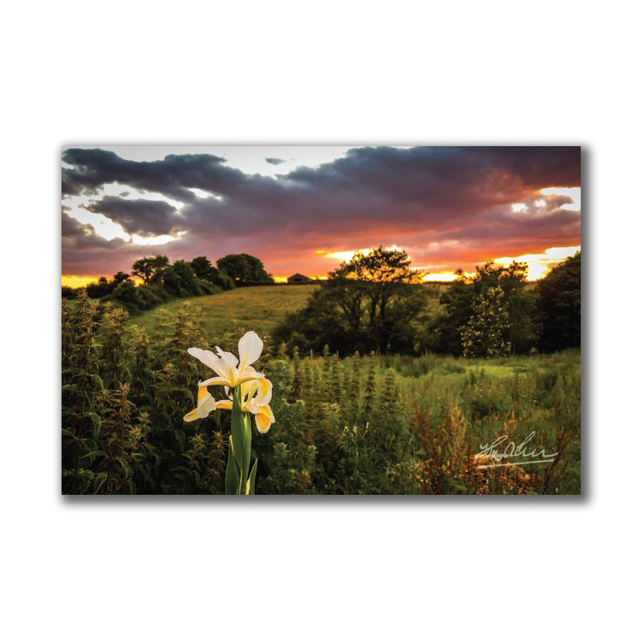 """Wild Iris at Sunset"" Irish Poster Print Poster Moods of Ireland"