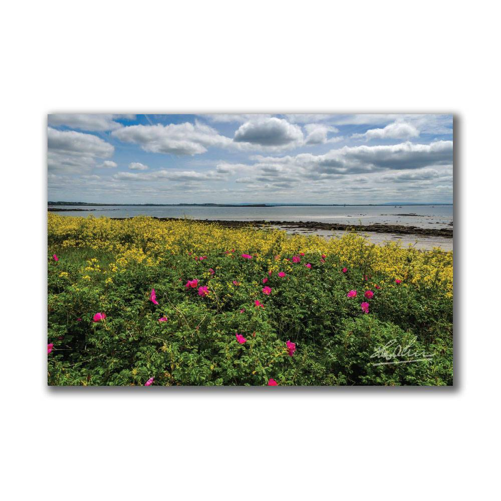 Wildflowers on Galway Bay Irish Poster Print Poster Moods of Ireland