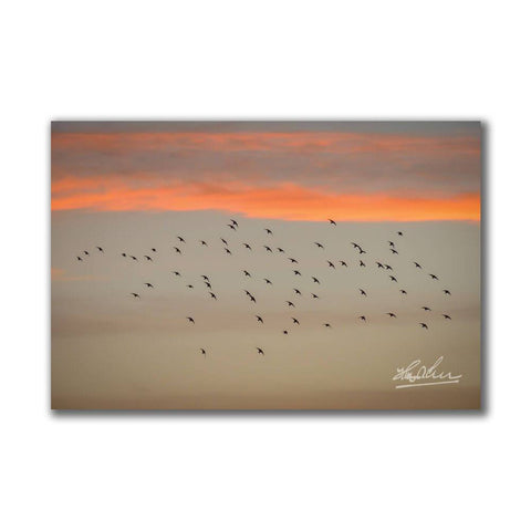 Image of Starlings at Sunset Irish Poster Print Poster Moods of Ireland
