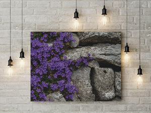 Purple Flowers on Stone Wall Irish Poster Print