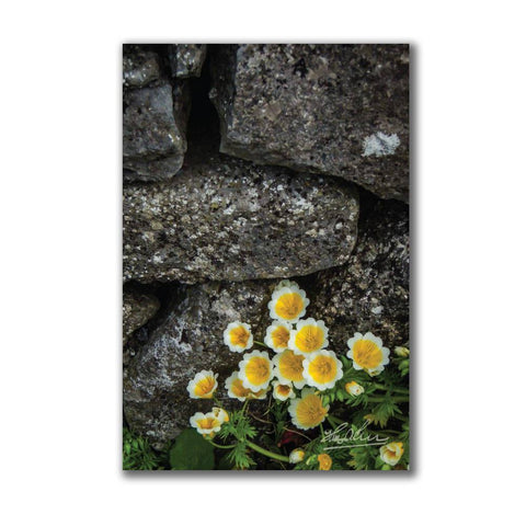 Image of Yellow Flowers Against Stone Wall Irish Poster Poster Moods of Ireland