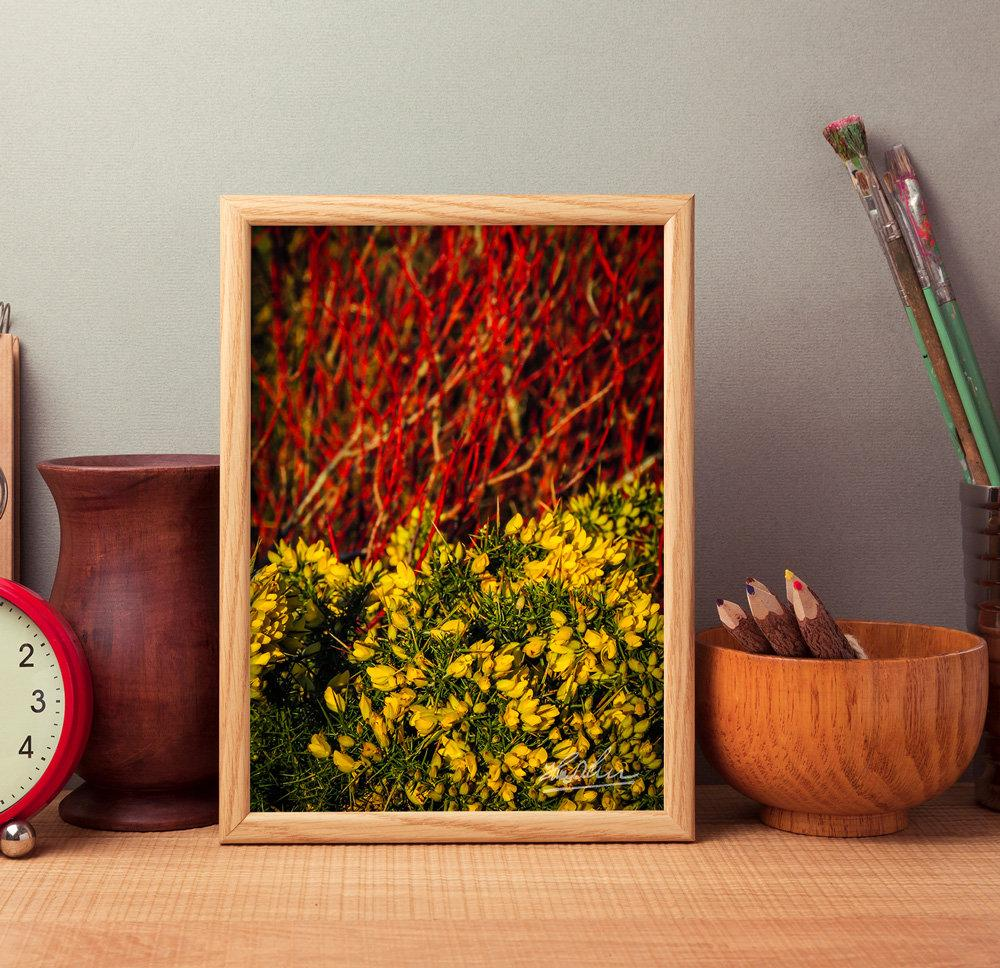 Gorse Blooming with Dogwood in County Clare, Ireland, Nature Poster Poster Moods of Ireland
