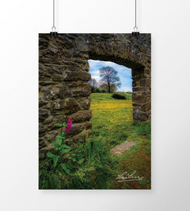 Print - Dandelion Meadow in County Clare - James A. Truett - Moods of Ireland - Irish Art