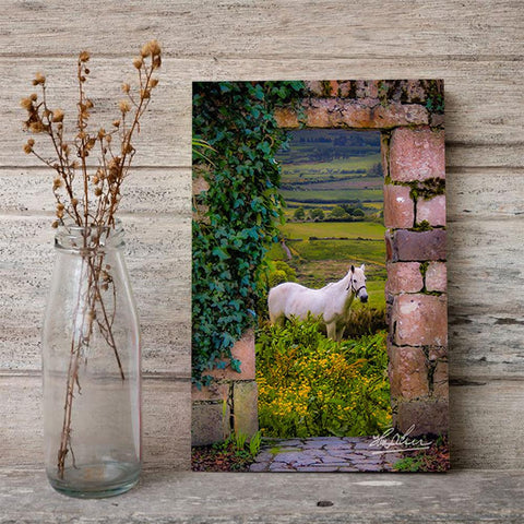 Image of Horse in the Irish Countryside, Irish Art Poster Poster Moods of Ireland