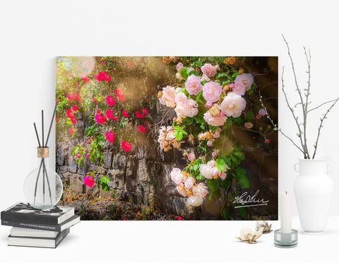 Image of Flower Art Mindfulness Gift Roadside Irish Roses Poster Print Poster Moods of Ireland