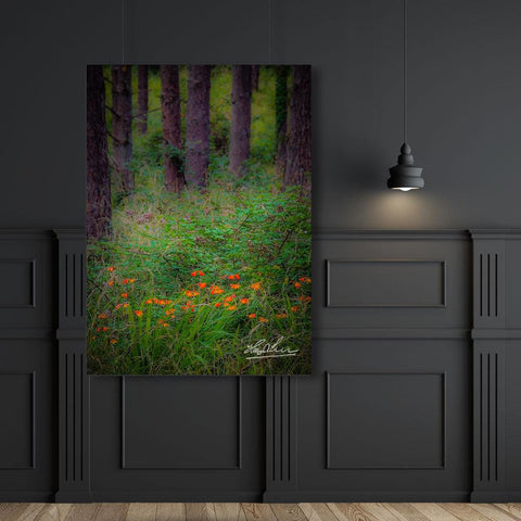 Image of Portumna Forest Park Paradise in County Galway, Ireland Poster
