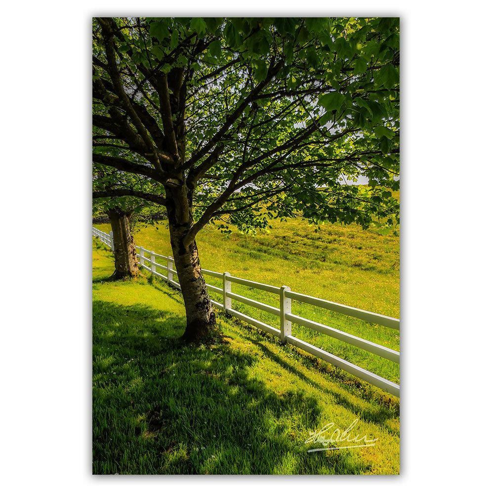 Ballynacally Spring Meadow Irish Poster Print